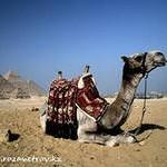 Опасно ли сегодня отдыхать в Египте?